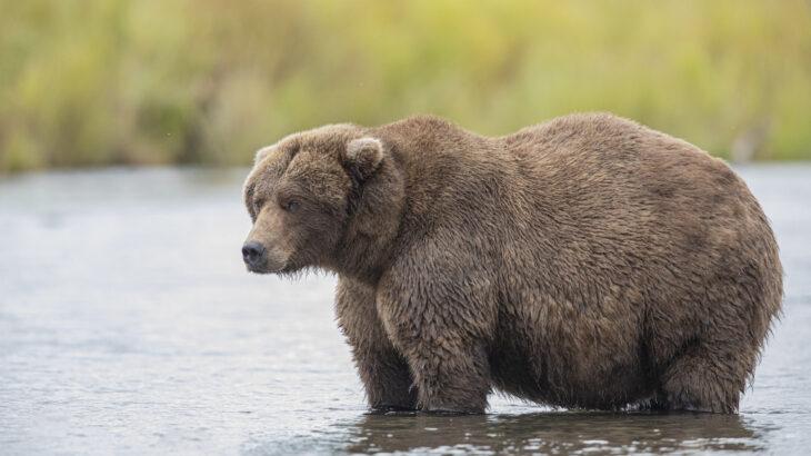 熊に遭遇した際の対処法! キャンプに潜む獣害の危険を回避する方法!
